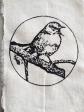 pájaro circulo